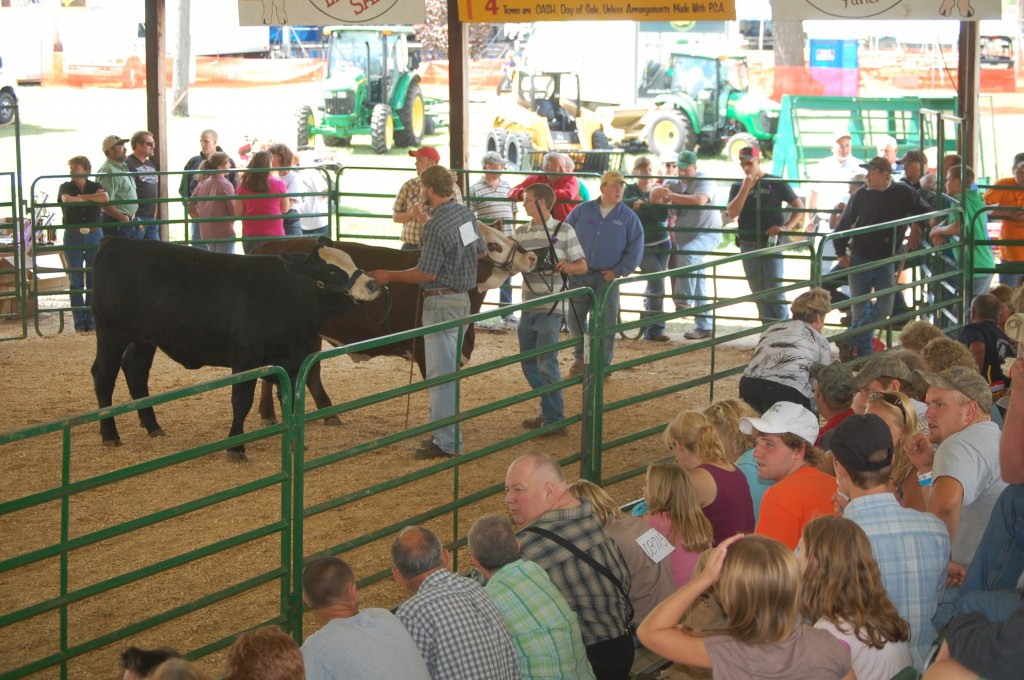The beef show at the Kenosha County Faor drew a sizable crowd.