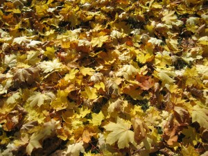Photo by vendenis via morgeFile.com