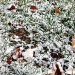 snow-11-10-2011