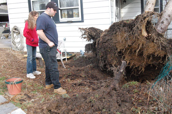 Jeanette and Anthony Hansen look over the base of the tree that was uprooted by wind last night and landed on their house.