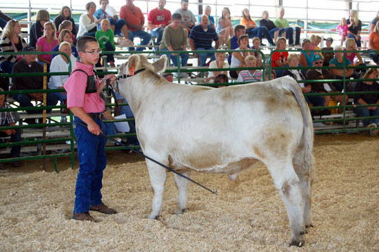 Joey McManus and his steer in the show today.