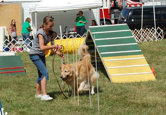 2013-dog-show-7