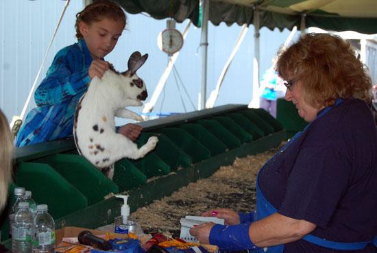 2013-rabbits-1