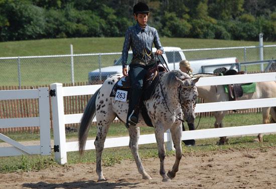 2013-sat-horse-6