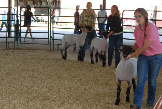 2013-sheep-show-3