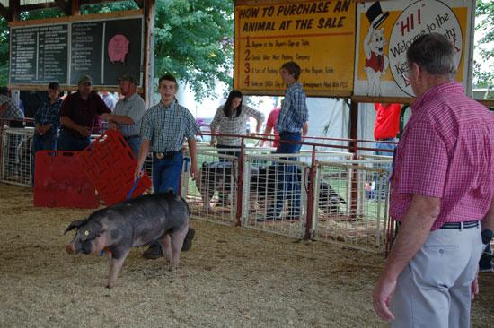 2013-swine-show-3