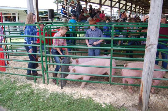 2013-swine-show-5