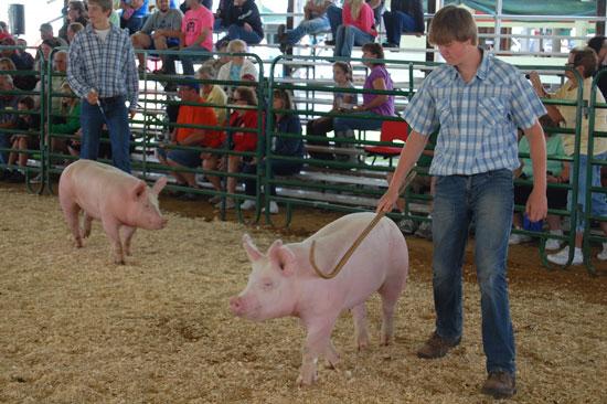 2013-swine-show-top