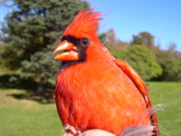 /Photo by Curt Milton via freeimages.com