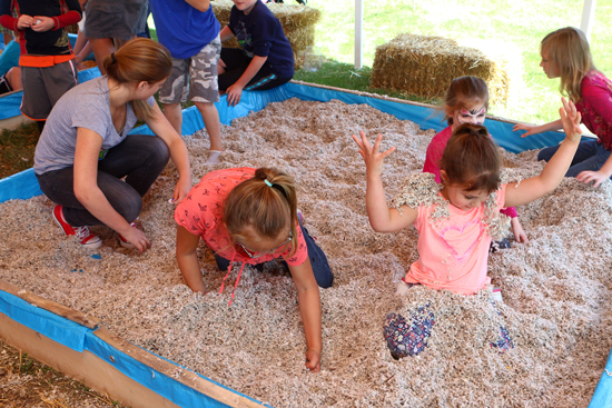 Kids looking for coins in cotton seed. Cows can eat cotton seed.