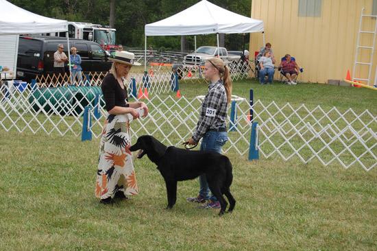 2014-fair-dog-show-1