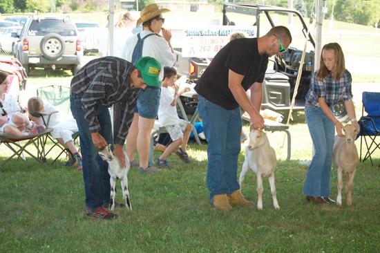 goat-show-fair-2014-2