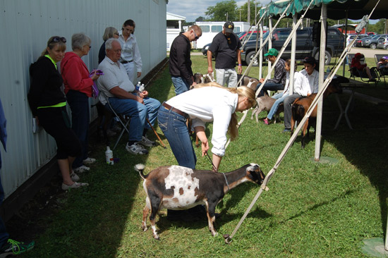 goat-show-fair-2014-4