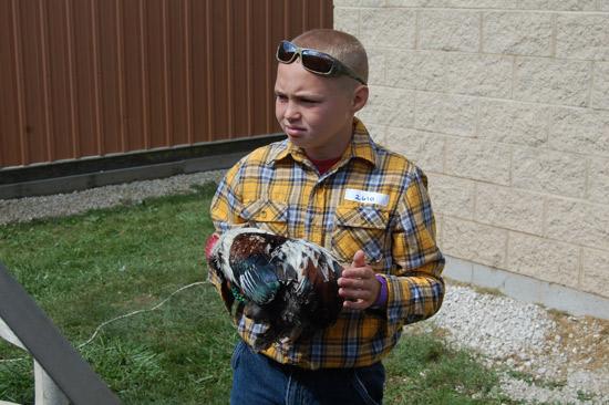 poultry-show-fair-2014-2