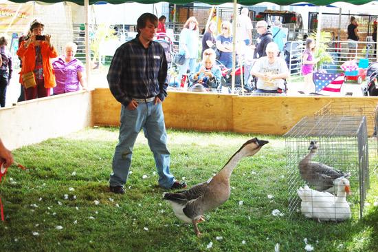 poultry-show-fair-2014-5