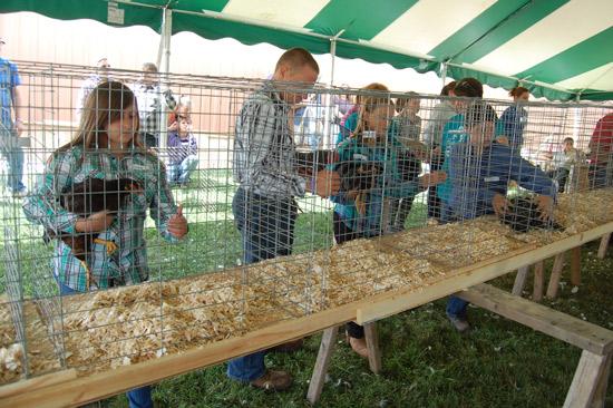 poultry-show-fair-2014-8