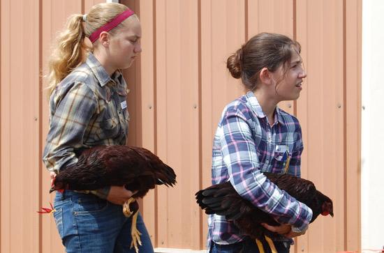 poultry-show-fair-2014-9