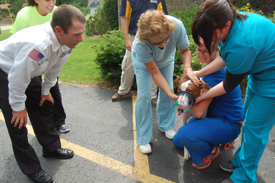 Mary Sue Lux, DVM, and other staff of Westosha Veterinary Hospital place the SIlver Lake Fire Department's new oxygen mask over a dog while SLFD Lt. Allen Dunski observes.