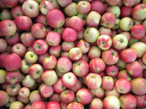 haf-apple-background-1-web
