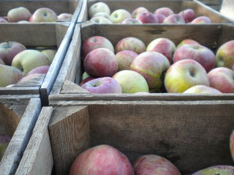haf-apple-background-2-web