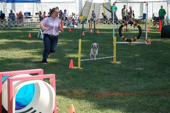 2016 fair dogs 3-opt