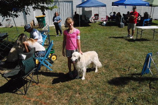 2016 fair dogs 5-opt