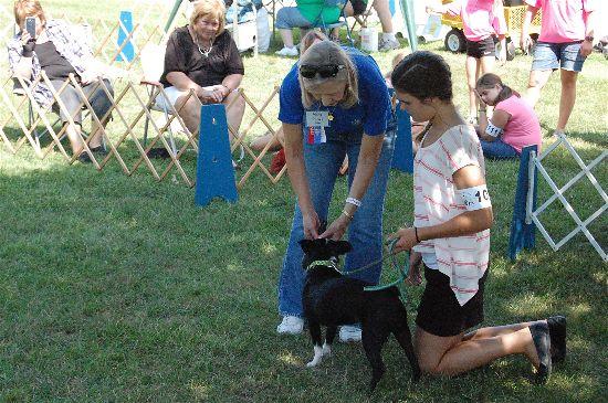 2016 fair dogs 6-opt