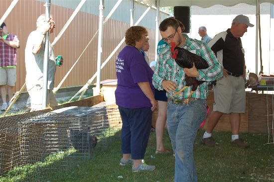 2016 fair poultry 4-opt