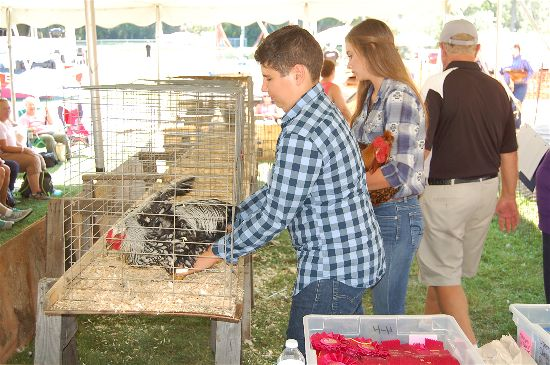 2016 fair poultry 7-opt