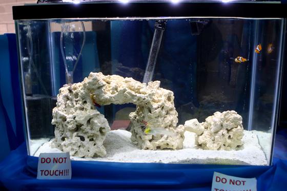 p8V9A1062-fish-tank